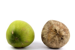 Juxtapose - Differences in the age Coconut. Juxtapose - Differences compare in the age Coconut fruits Stock Photos