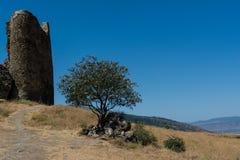 Jvari,墙壁,在石头中的一棵树的废墟修道院  库存图片