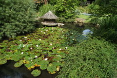 Köln, ιαπωνικός κήπος Στοκ εικόνα με δικαίωμα ελεύθερης χρήσης