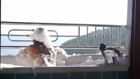 Kąpanie młoda ładna kobieta relaksuje w wannie piankowy dźwiganie przy tropikalnym kurortem z zadziwiającym dennym widokiem swobo zbiory wideo
