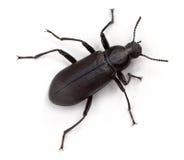 Käfer Lizenzfreies Stockfoto