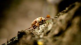 käfer Stockfoto