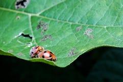 käfer Stockbild