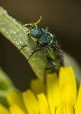 Käfer auf Blatt Stockfoto