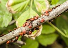 Käfer auf Brunch Stockbilder