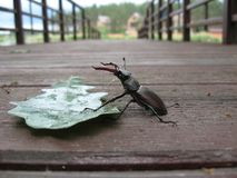 Käfer auf dem Pier stockbilder