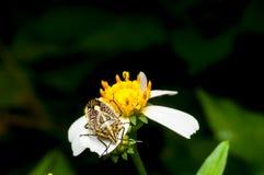 Käfer auf der Blume Lizenzfreie Stockbilder
