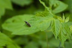 Käfer auf einem Blatt Stockbild