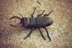 Käfer auf einem enormen Stein, Spielzeug Lizenzfreies Stockfoto