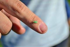 Käfer auf einem Finger Lizenzfreie Stockfotografie