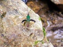 Käfer auf einem Stein Stockfoto