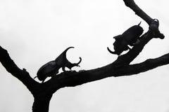 Käfer auf einem weißen Hintergrund Lizenzfreie Stockfotos