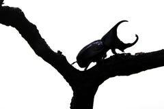 Käfer auf einem weißen Hintergrundbereich Stockfoto