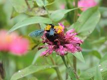 Käfer auf einer Blume lizenzfreies stockbild