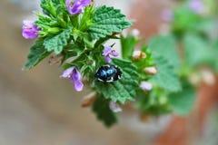 Käfer auf einer Blume Stockfoto