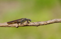 Käfer auf einer Niederlassung Lizenzfreies Stockbild