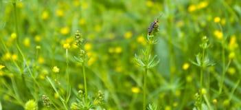 Käfer auf Gras an der Spitze Stockfotografie