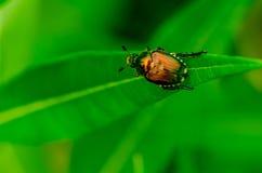 Käfer auf seiner Reise lizenzfreie stockfotos