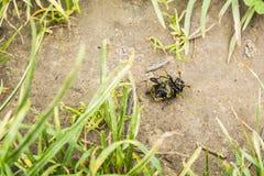 Käfer von unterhalb angesehen Lizenzfreies Stockbild