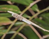 Käferbaby, das von den Eiern herauskommt Lizenzfreie Stockfotografie