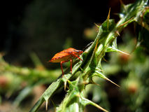 Käfersoldat klettert den Stamm der Anlage Stockbild