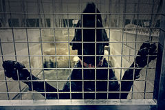 Käfig verlassene Hunde Lizenzfreie Stockfotos