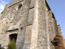 Käk-käk hund och en stängd kyrka Royaltyfri Foto