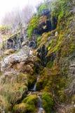 Källa av floden Cuervo Arkivfoton