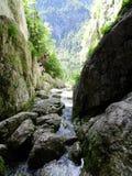 Källa av floden Socha Arkivfoto