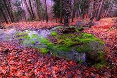 Källa i skogen Royaltyfri Bild