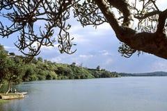 Källan av den vita Nile River i Uganda Arkivfoto