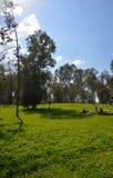 Källor av den Yarkon floden Royaltyfria Bilder