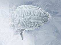 Kälteerzeugendes Konzept des gefrorenen Gehirns kleinhirn Illustration des Frostes 3D des menschlichen Gehirns Lizenzfreie Stockfotos
