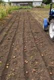 Kämme der Kartoffel mit kleinem Traktor oben graben Stockfoto