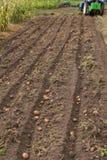 Kämme der Kartoffel mit kleinem Traktor oben graben Stockfotos