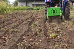 Kämme der Kartoffel mit kleinem Traktor oben graben Stockfotografie