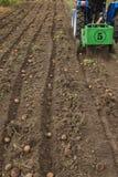 Kämme der Kartoffel mit kleinem Traktor oben graben Stockbilder