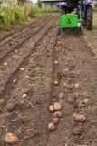 Kämme der Kartoffel mit kleinem Traktor oben graben Lizenzfreie Stockbilder