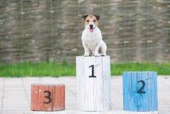 Kämpa för hunden på en sockel på det första stället royaltyfria foton