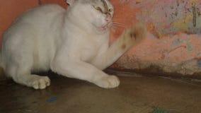 Kämpfende Katze stockfotografie