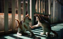 Kämpfende Katze Lizenzfreies Stockbild