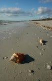 Kämpfende Pustel auf Strand Lizenzfreies Stockbild