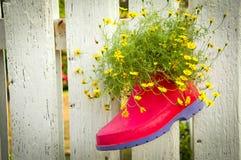 Känga med blomman på fenchen Arkivfoto