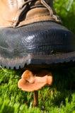 kängan förstör champinjonen Arkivbilder