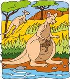 Känguru Lizenzfreies Stockfoto