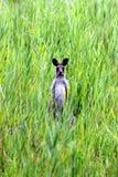 Känguru auf der Sonnenscheinküste Lizenzfreie Stockbilder