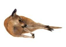 känguru för tolkning 3D på vit Arkivfoton