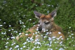 Känguru som vilar på gräs Fotografering för Bildbyråer