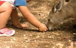 Känguru- und Menschenkind-Verhältnis Lizenzfreies Stockfoto
