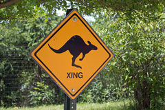 Kängurukorsning Fotografering för Bildbyråer